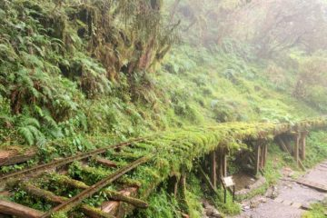【Yilan Day Tour】Hike in the World's Most Beautiful Trails in Yilan – Jianqing Huaigu Trail & Linmei Shipan Trail